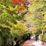緑豊かな観光地の画像