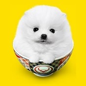 ソフトバンク「光でギガ特盛 吉野家牛丼1年分プレゼントキャンペーン」