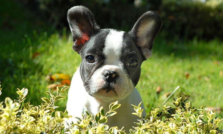 TODO sobre la Anemia Canina Sntomas Tratamiento y Dieta