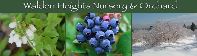 blueberries walden heights