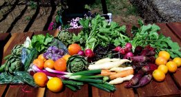 How to Support Local Farms