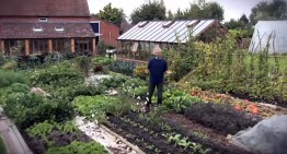 """How To Turn A """"Dead"""" Lawn Into An Abundant Living Garden – No Digging Required"""