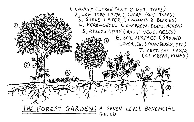 The Forest Garden, Or