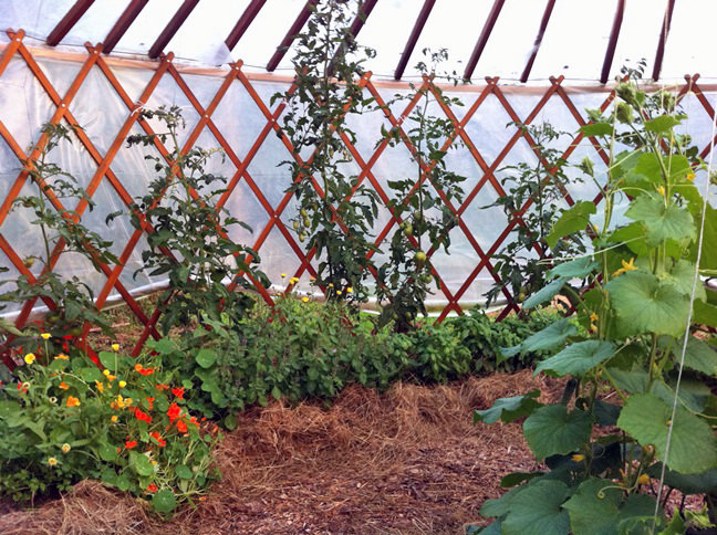 A yurt greenhouse