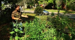 Permaculture Paradise: Tour of Alex's Permagarden