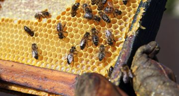 32+ Free Beekeeping Resources
