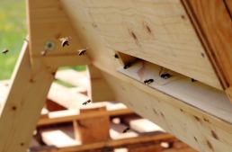 Nordic Bees In The Top Bar Hive