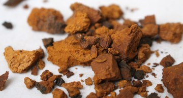 Chaga – The Old New Superfood