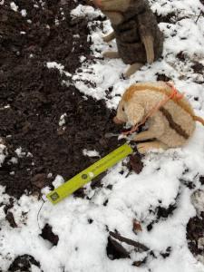 Wildschwein Wilma Wusel sitzt mit ihrem Lineal und ihrer Lupe im Schnee und untersucht Spuren.