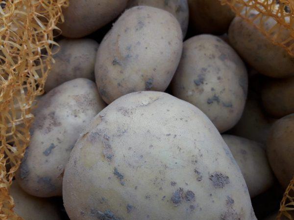 Berlikumer geeltje (aardappel)