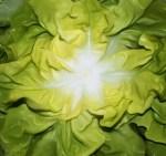 greenrose