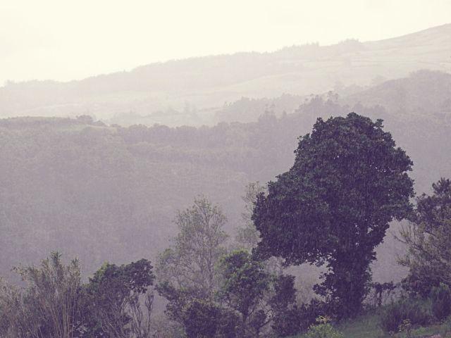 Regen auf Flores   Waldspaziergang.org
