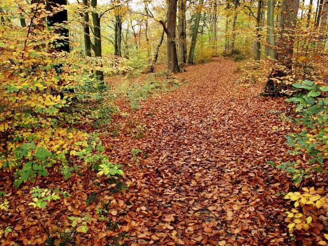 Herbstwald | Waldspaziergang.org