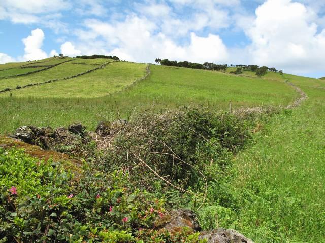 Im Westen von Sao Jorge | Waldspaziergang.org