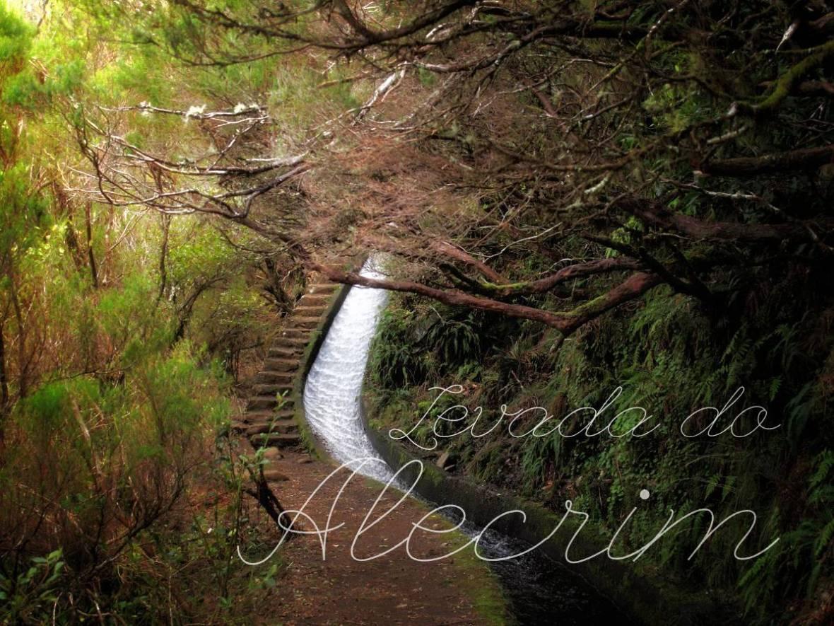 Wandern auf Madeira: Entlang der Levada do Alecrim (Rosmarinlevada)
