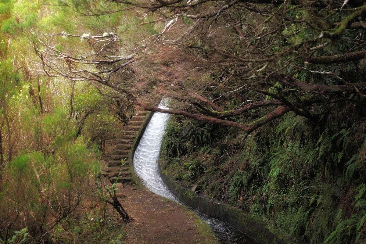 Auf Madeira: Wandern entlang der Rosmarin-Levada