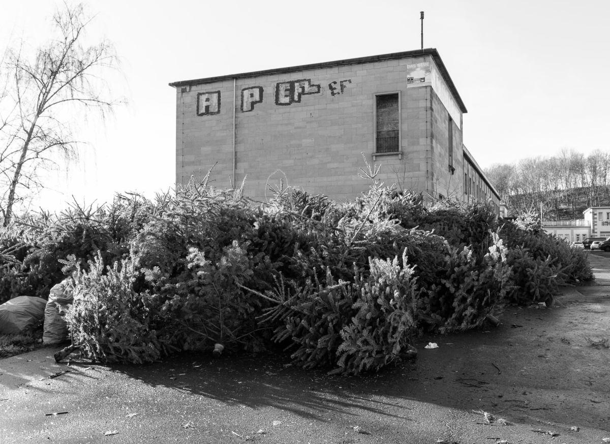 Friedhof der Weihnachtsbäume