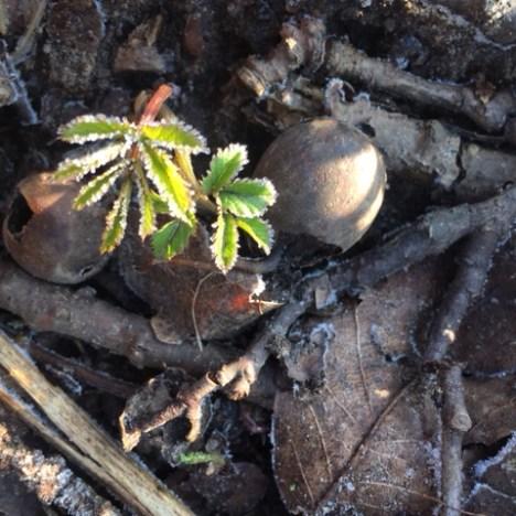 Frühlingsboten in Wald und Wiesen. Naturverbindung zum Frühlingsanfang