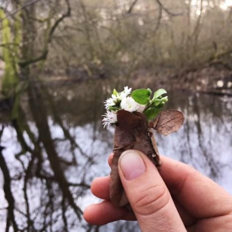 Frühling? Frühling! Gedanken zur Frühlings-Tag-und-Nacht-Gleiche