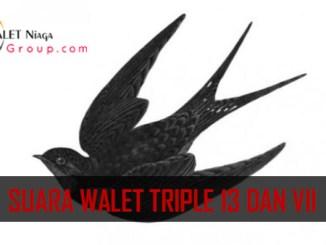 Suara walet triple 13