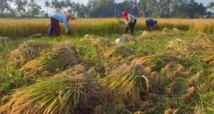 pertanian-trenggalek