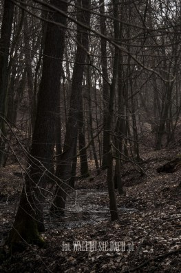 Dolina źródeł rzeki Drwęcy