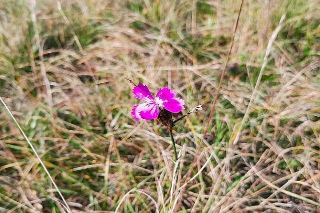 Am Orchideenpfad
