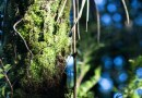Northland forests