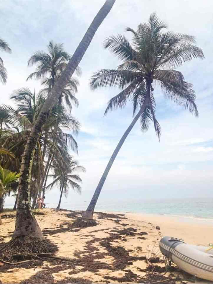 palm trees on the san blas islands
