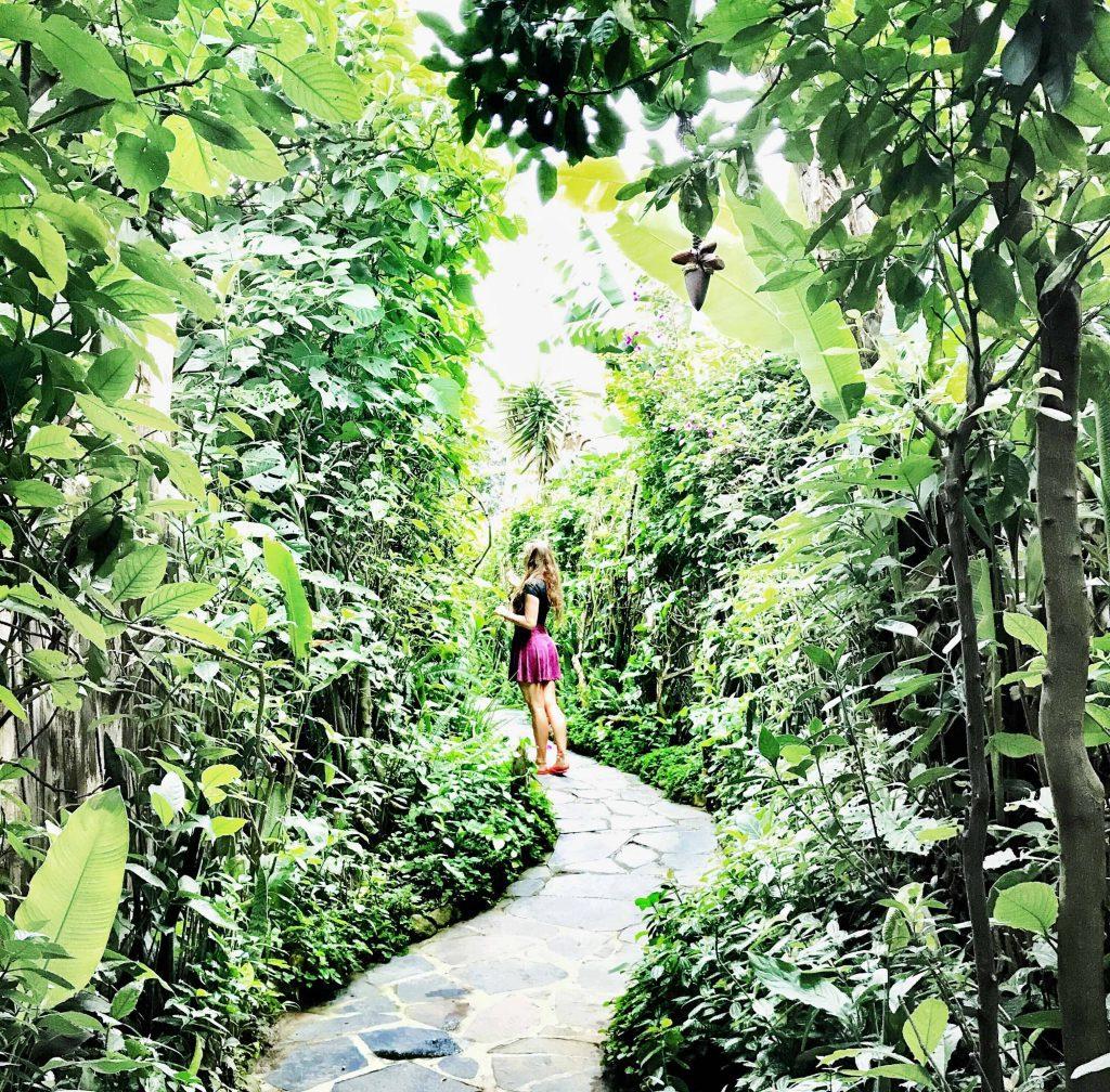 Pathway to Lush