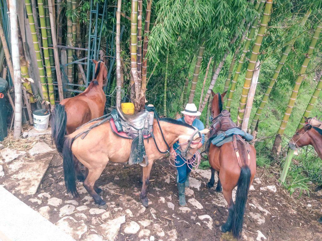 cowboy culture in salento colombia