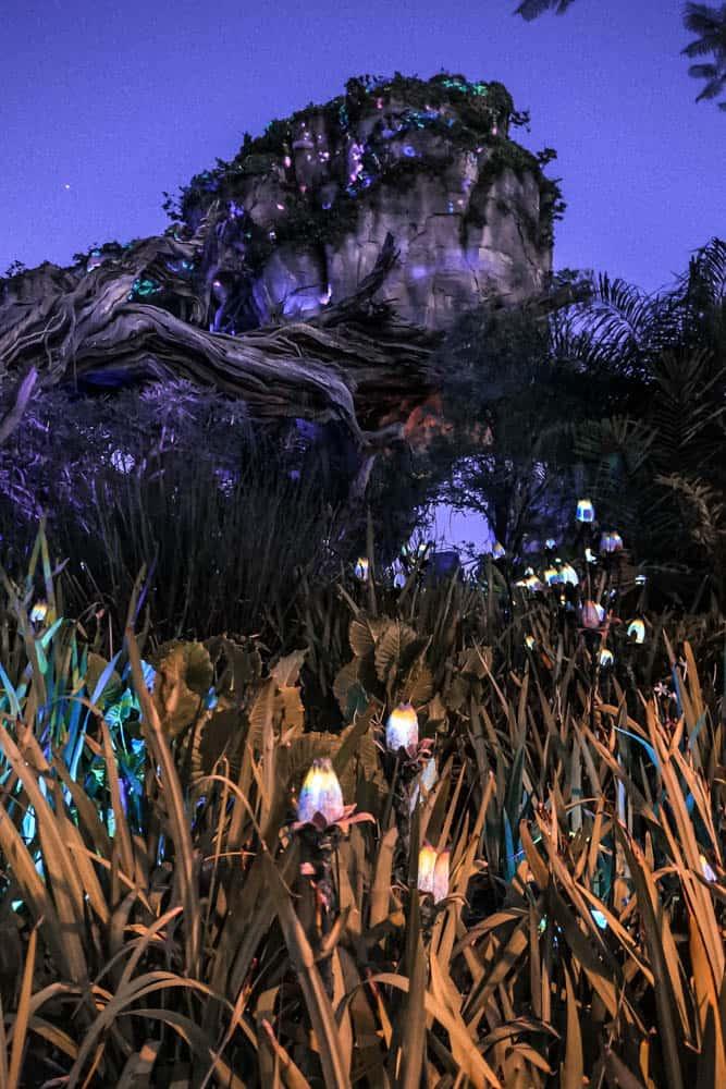 pandora the world of avatar at night