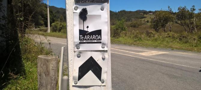 Northland section hiking Te Araroa