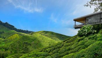 View over the Boh tea estate in the Cameron Highlands, Malaysia