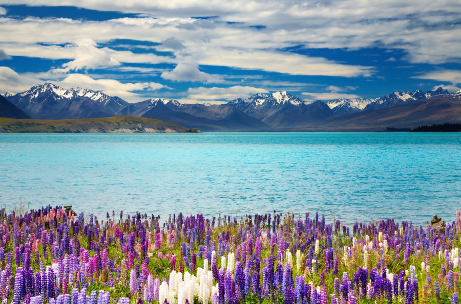 10 Free Things To Do On New Zealand's South Island