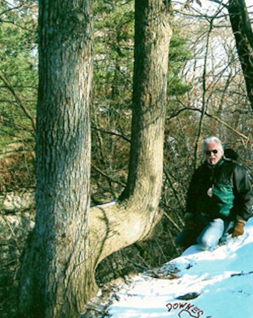Trail marker tree
