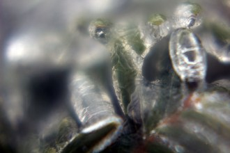 ice04
