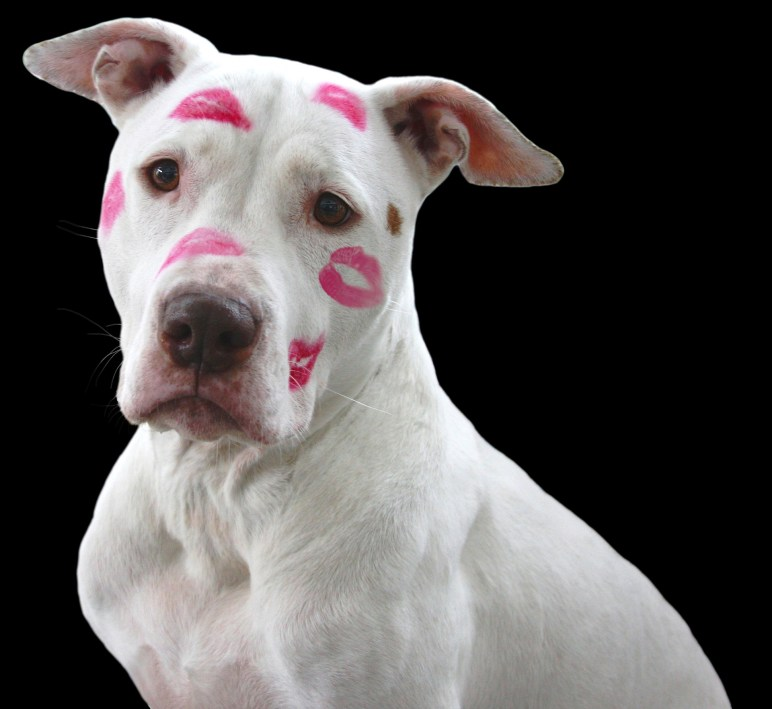 Dog with lipstick kisses on his face