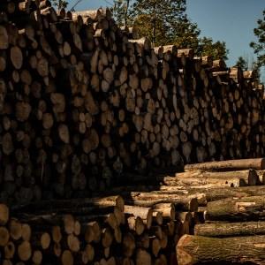 Cheltenham kiln dried logs