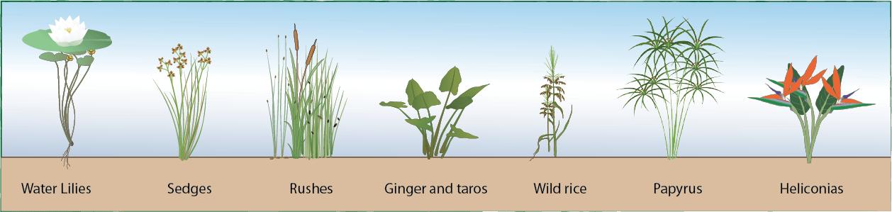 Plants Around Pond Edge