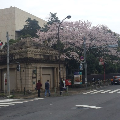 Old Ueno Zoo and Museum Station and Cherry Blossoms
