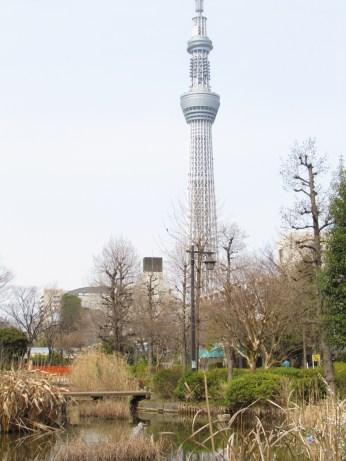 Tokyo Sky Tree from Oyokogawa Water Park