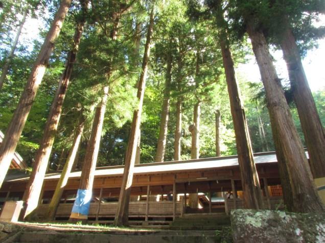 Cedars in Hon-Miya of Suwa Taisha