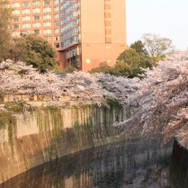 Cherry blossoms along the Kandagawa River and Chinzanso Hotel