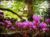Flowers On The Leafy Loop Walk Durrow