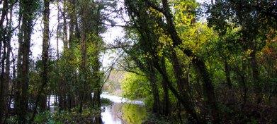 Floods at Knockatrina Wood Durrow