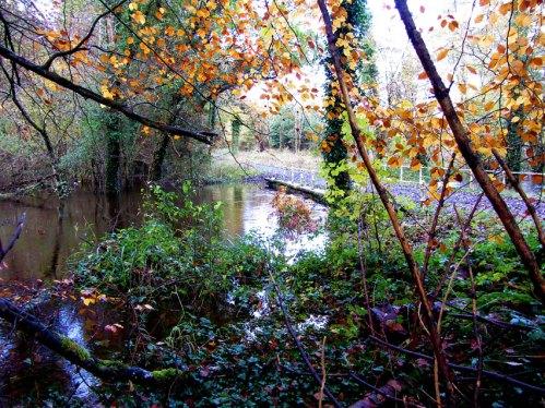 Flood At Dunmore Wood Durrow