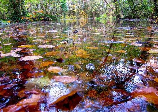Flood On Leafy Loop walk