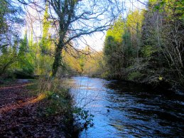 Dunmore Wood Durrow.