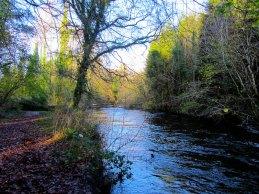 Dunmore Wood Durrow.
